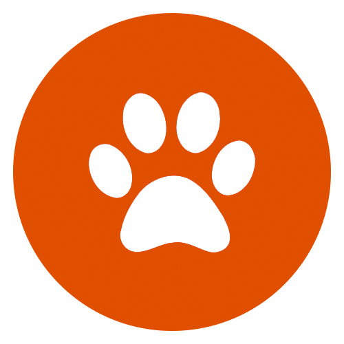 Dog Grooming Heathfield