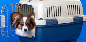 Travel and Pet Carriers