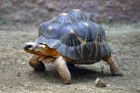 Reptile and Tortoise