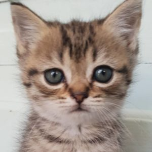 Cat Food and Treats
