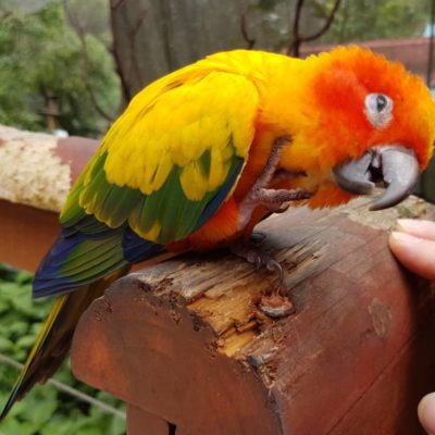 Aviary Birds Food and Accessories